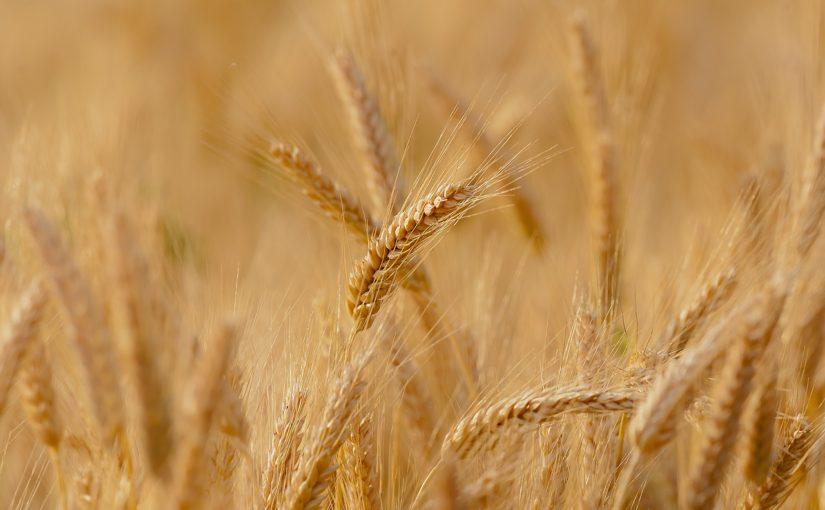 https://sklep.arkop.pl/rolnictwo/rolnictwo-rosliny-straczkowe.html